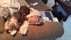 doggie-business-cards-laptop